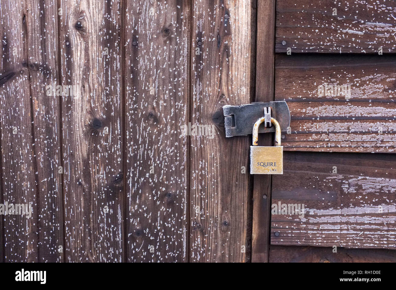 Light frost shows grain on timber shed with latch and padlock. England 2019. - Stock Image