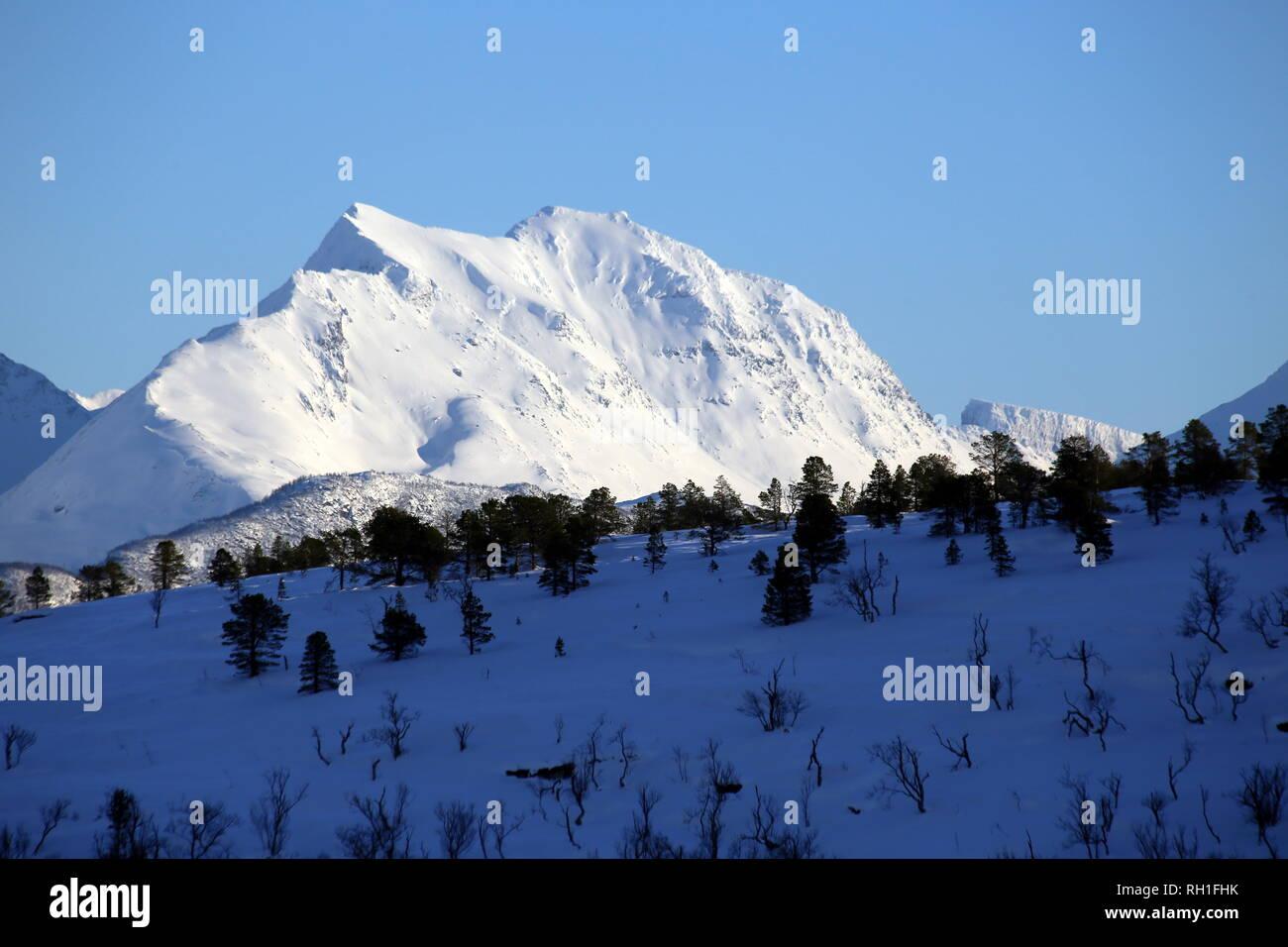 Von Bodö nach Tromsö - Im Hintergrund ein verschneiter Berggrat, im Vordergrund verdeutlichen einzelne Fichten Tiefe und Höhe des Bergpanorramas. - Stock Image