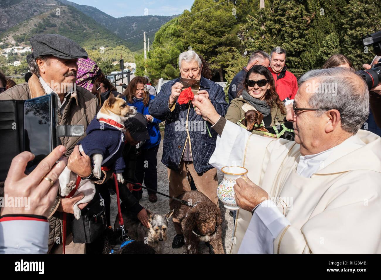 Animals blessing, pilgrimage of San Anton. White village of Mijas Pueblo. Malaga province, Costa del Sol. Andalusia southern Spain. Europe - Stock Image