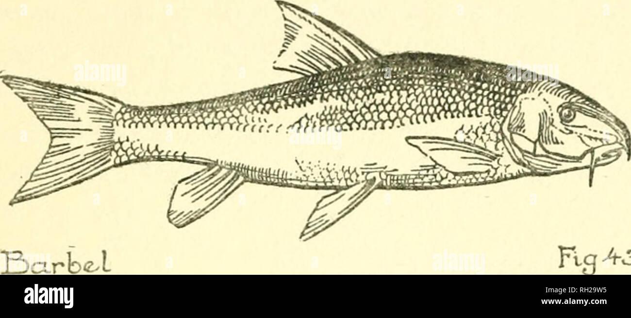 British Reptiles Amphibians And Fresh Water Fisches Amphibians Great Britain Freshwater Fishes Great Britain