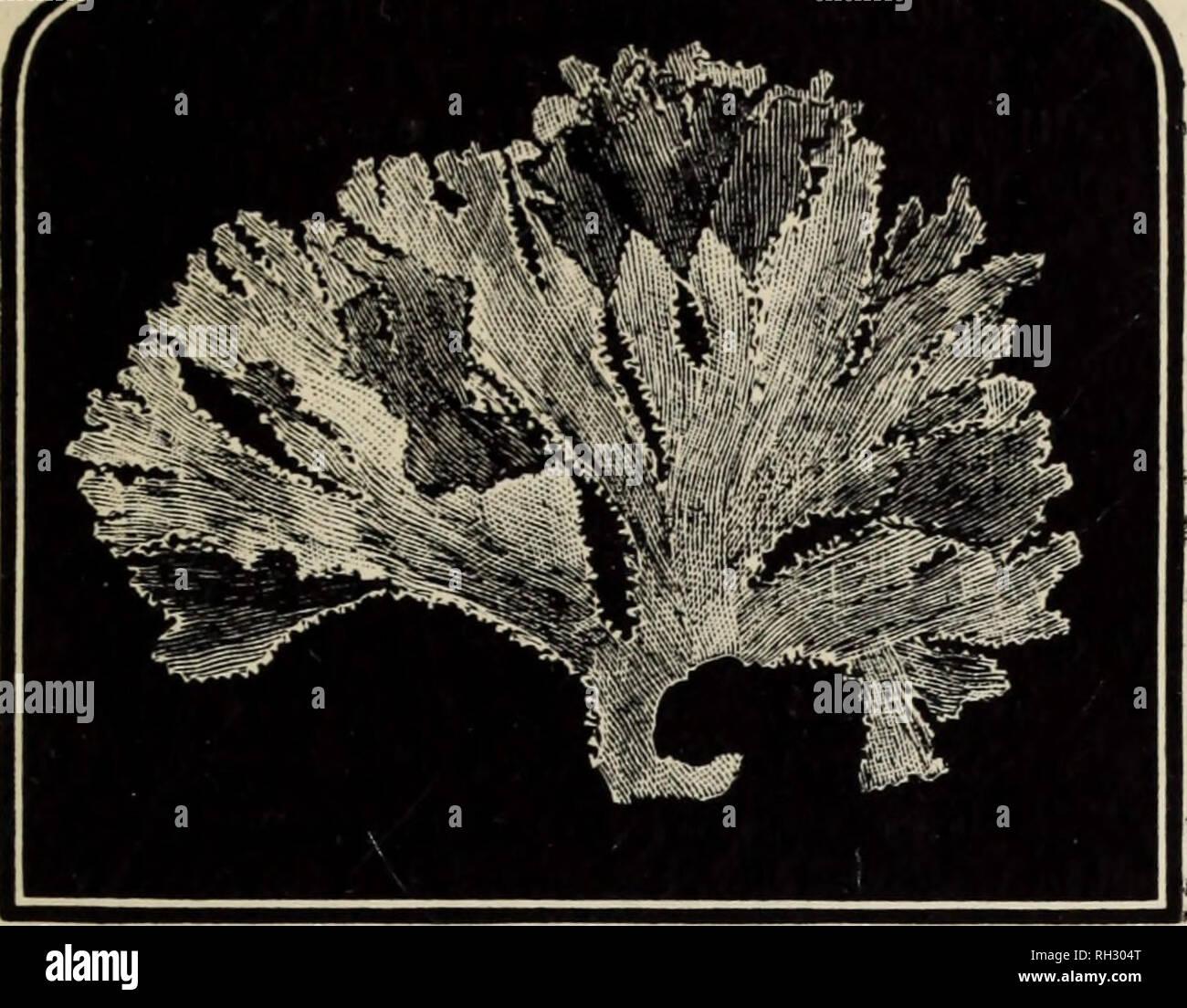 Seaweeds Stock Photos & Seaweeds Stock Images - Page 7 - Alamy