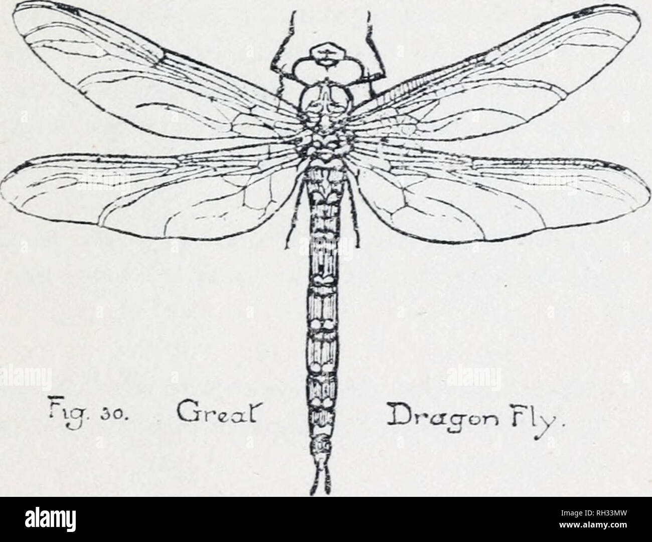 British insects (general)  Illustrated by Doris Meyer