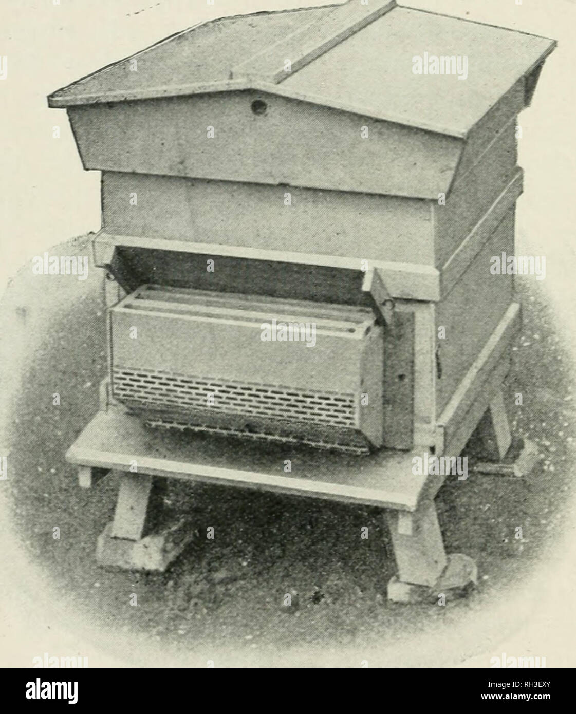 """. British bee-keeper's guide book to the management of bees in movable-comb hives, and the use of modern bee-appliances. Illustrated. Bee culture. 22 PREVENTION OF SWARMING. used in forming- nuclei or strengthening weaker stocl^s. Should the outer combs be broodless and filled with hone', additional breeding-space can be given by extracting it. Whatever plan may be adopted, the bees should never feel cramped for want of room, or. Fig. 9.—Prevention of Swarming. The """" Brice """" Appliance (as fixed). be distressed by lack of ventilation. Artificial swarm- ing is dealt with later on (see - Stock Image"""