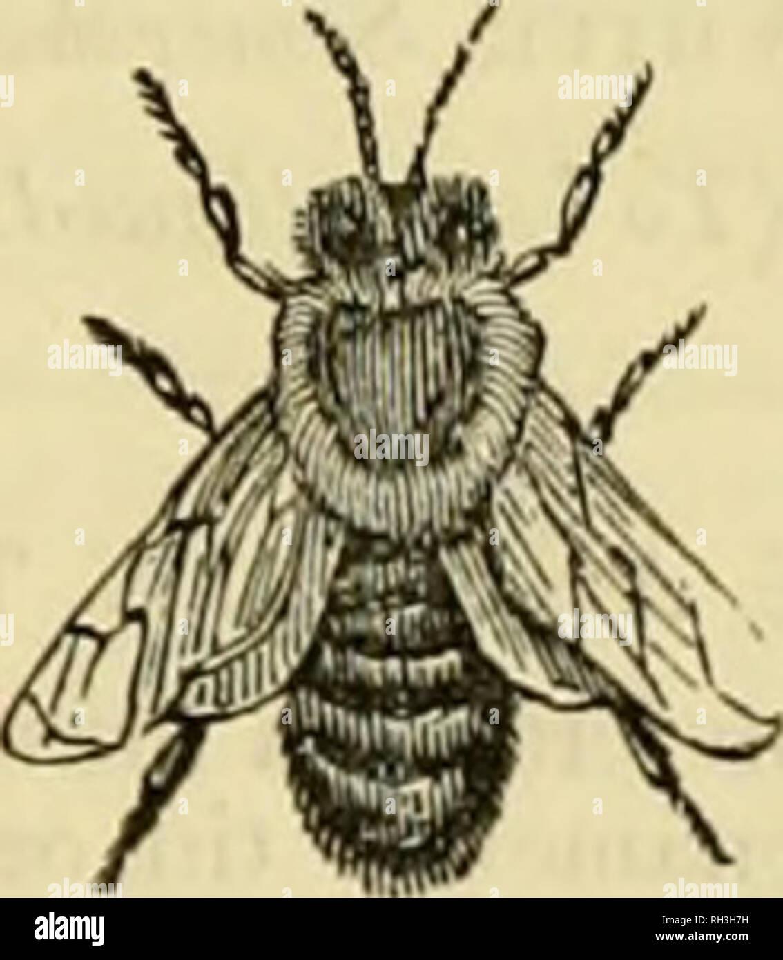 British Bee Journal Bee Keepers Adviser Bees Queen