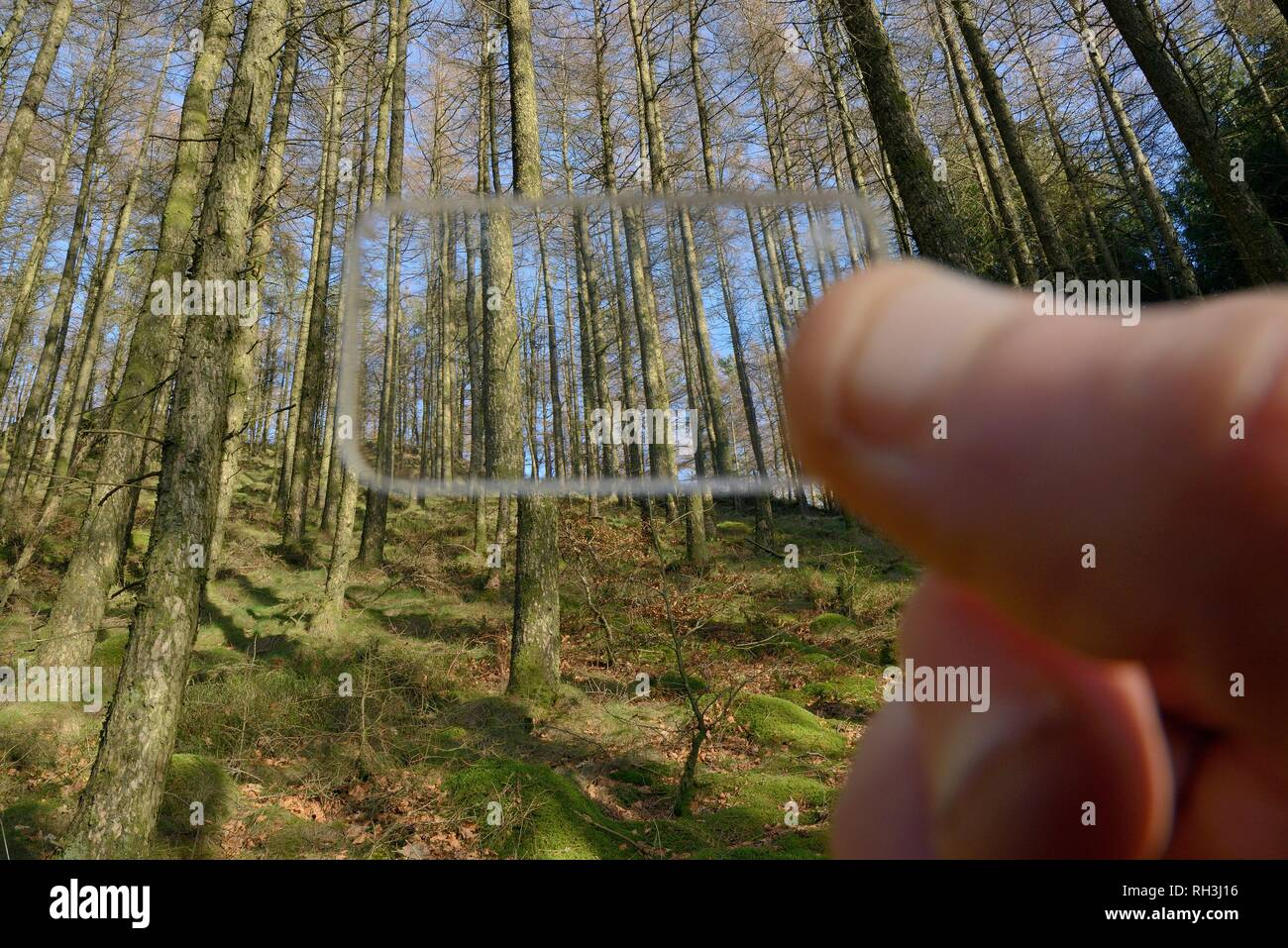 Wedge prism relascope used to record the density of trees in a coniferous plantation, Cambrian Mountains, Wales, UK - Stock Image