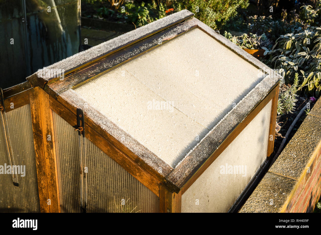 A frost-covered wooden cold frame on a raised bed protecting plants during January in an English garden Stock Photo
