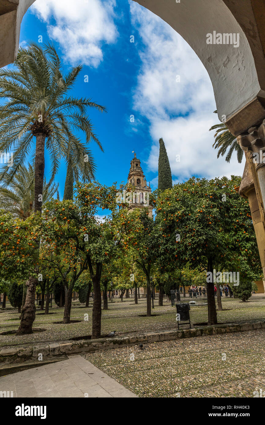 Beautiful image of a garden with orange trees and palm trees on a wonderful sunny day with a blue sky and white clouds in the city of Cordoba Spain - Stock Image