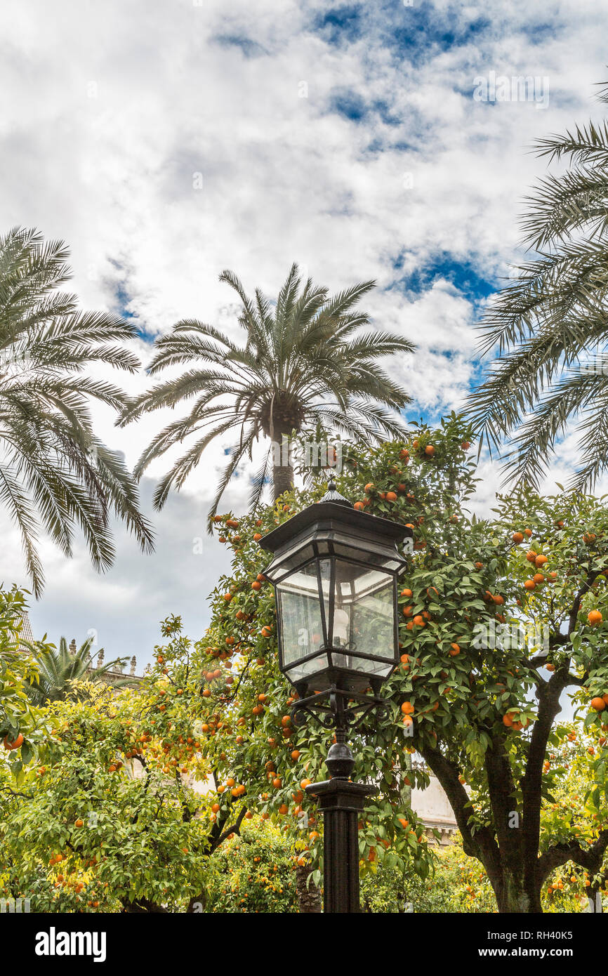 View of a lamp between palm tree and orange trees on a wonderful day with a blue sky and white clouds background in Cordoba Spain - Stock Image