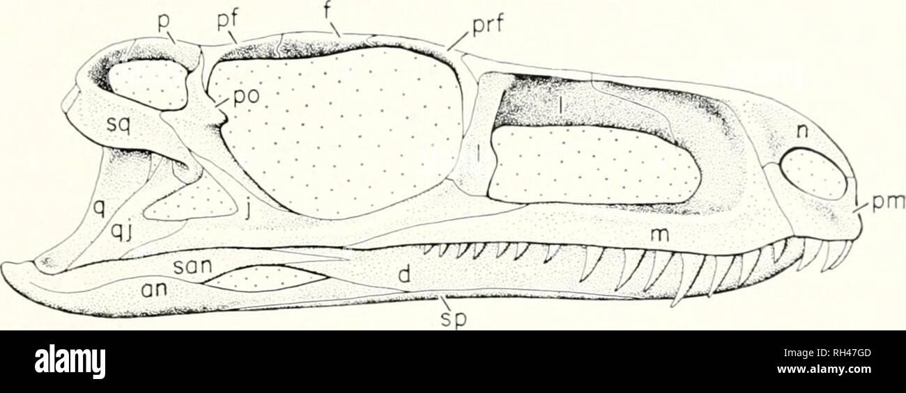 Breviora  1972 GRACILISUCHUS STIPANICICORUM  Figure 2  The