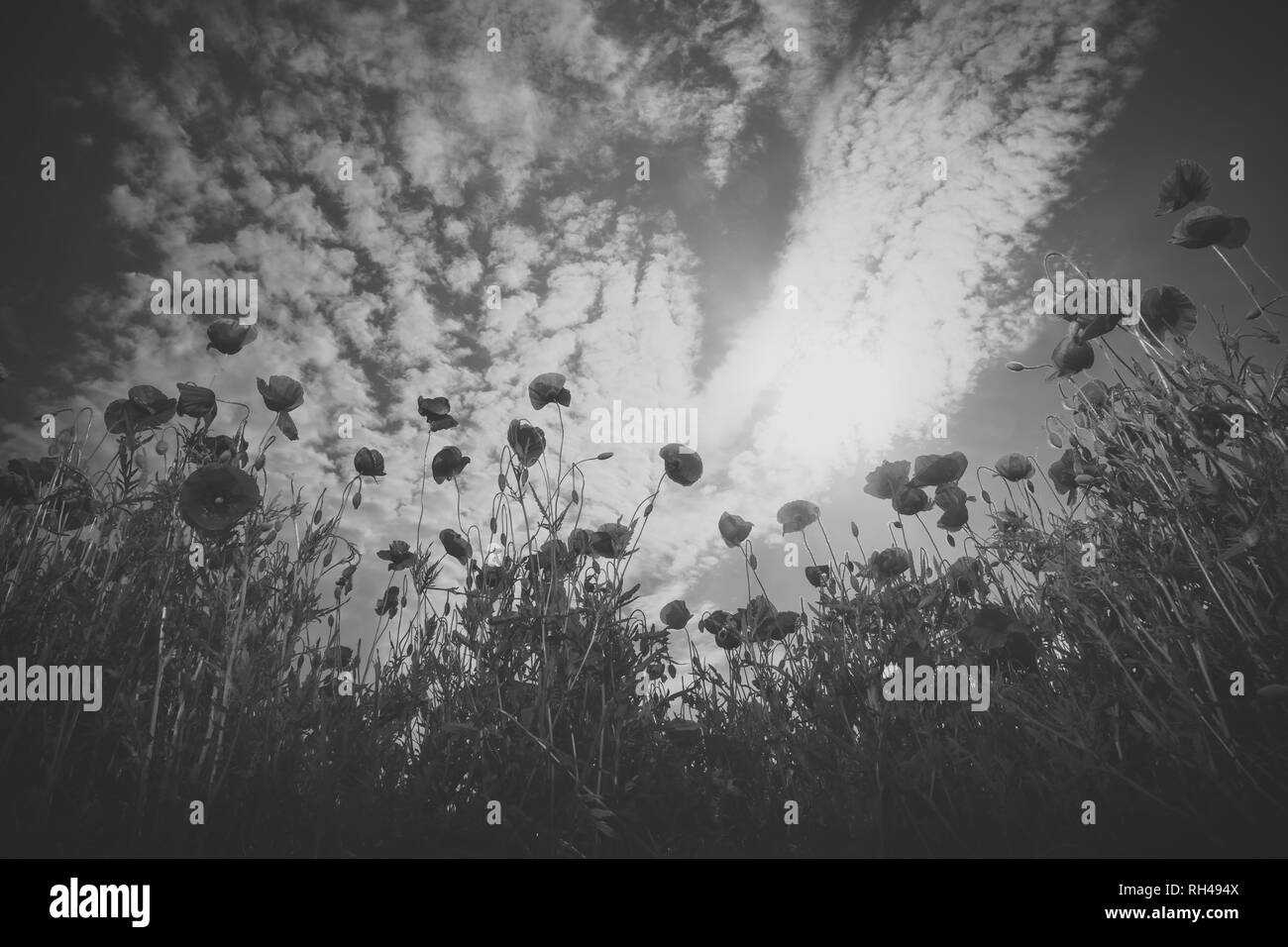 Narcotics Black and White Stock Photos & Images - Alamy