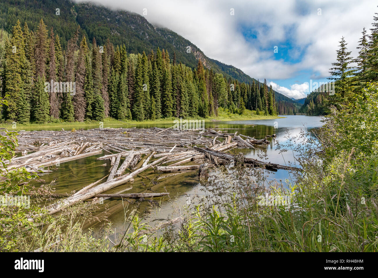 Canadian landscape scene with river, trees and logs - Stock Image