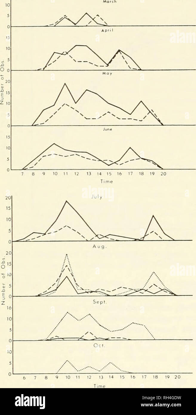 . Brigham Young University science bulletin. Biology -- Periodicals. Brigham Young llNiviiiiSirv Scienck Bullktin. Fig. 5. Number and age ot lizards observed, ]5lolte<l against time of dav, throughout tlie activity season of 1971 and March 1972. Solid line represents adults; dashed line, juveniles; dotted line, hatch- lings. air at 1 m ami 3 mm above the .substrate in late June, Julv, and Augu.st ranged from 34 to 40 C and from 43.2 to 45.0 C. Temperatures above 50 C for actual .substrate surface were noted freciuentlv during the afternoons of the warmer months. Our data indicate that adult - Stock Image