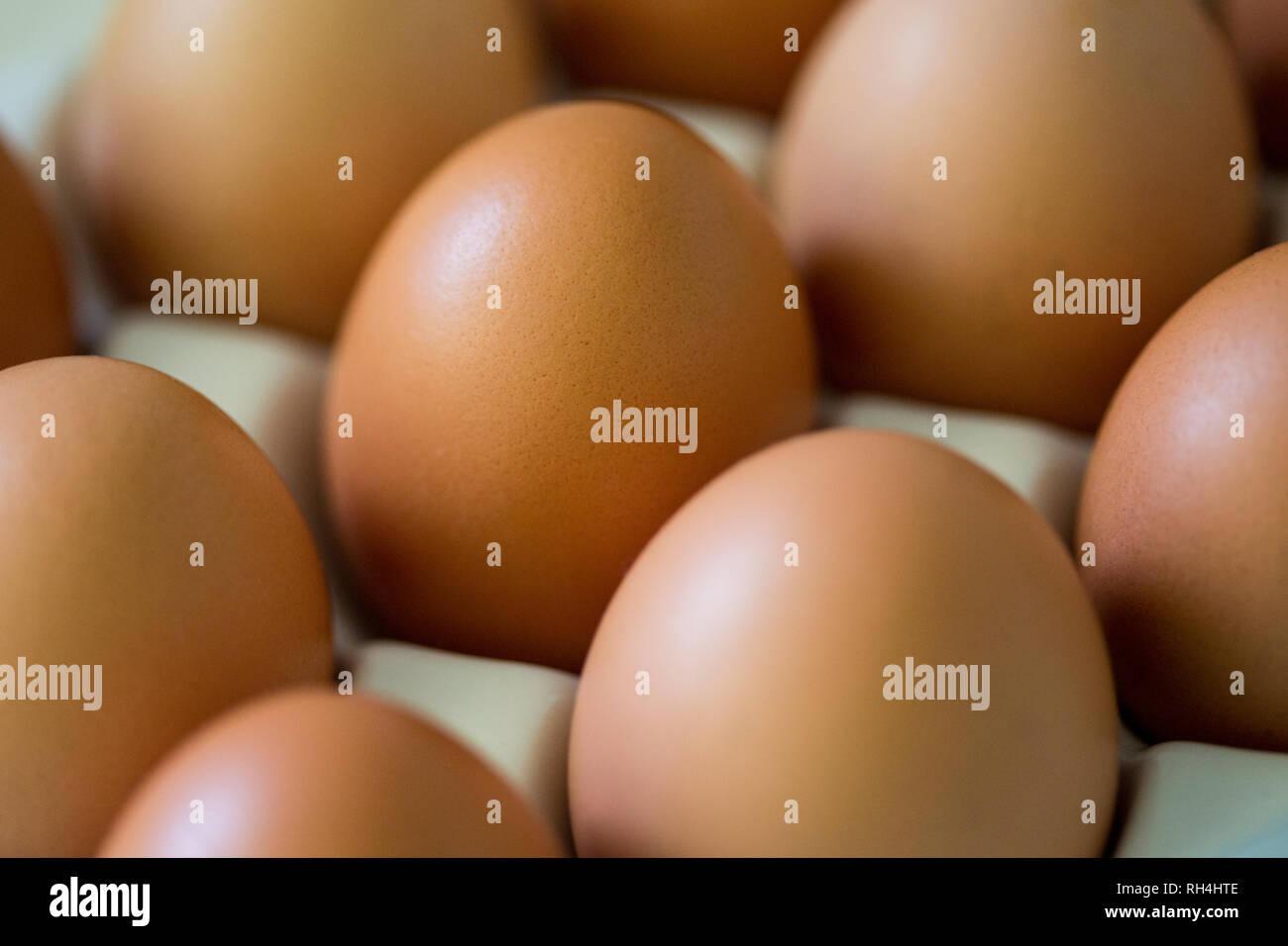 brown eggs in egg holder. - Stock Image