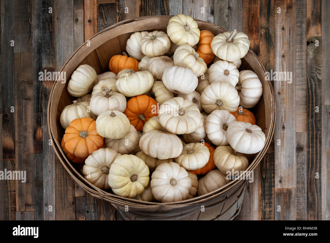 Small white mini pumpkins in a wooden basket Stock Photo