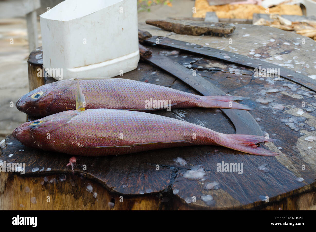 Fresh fish Red Snapper or Threadfin bream before cooking on the cutting table. Fish street makret in Sri Lanka. Stock Photo