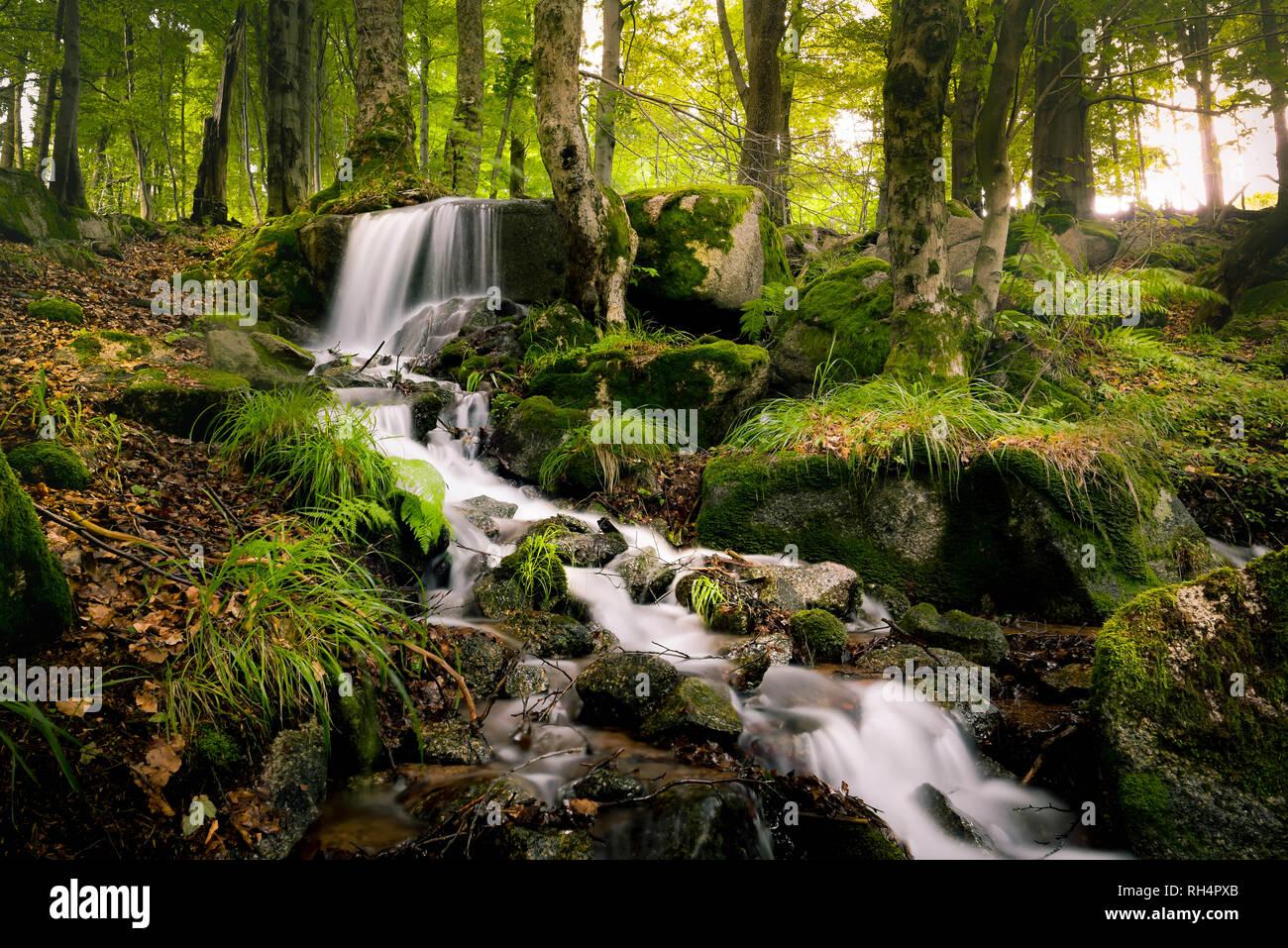 Wunderschöner Wasserfall im Thüringer Wald umgeben von grünen Pflanezn Stock Photo
