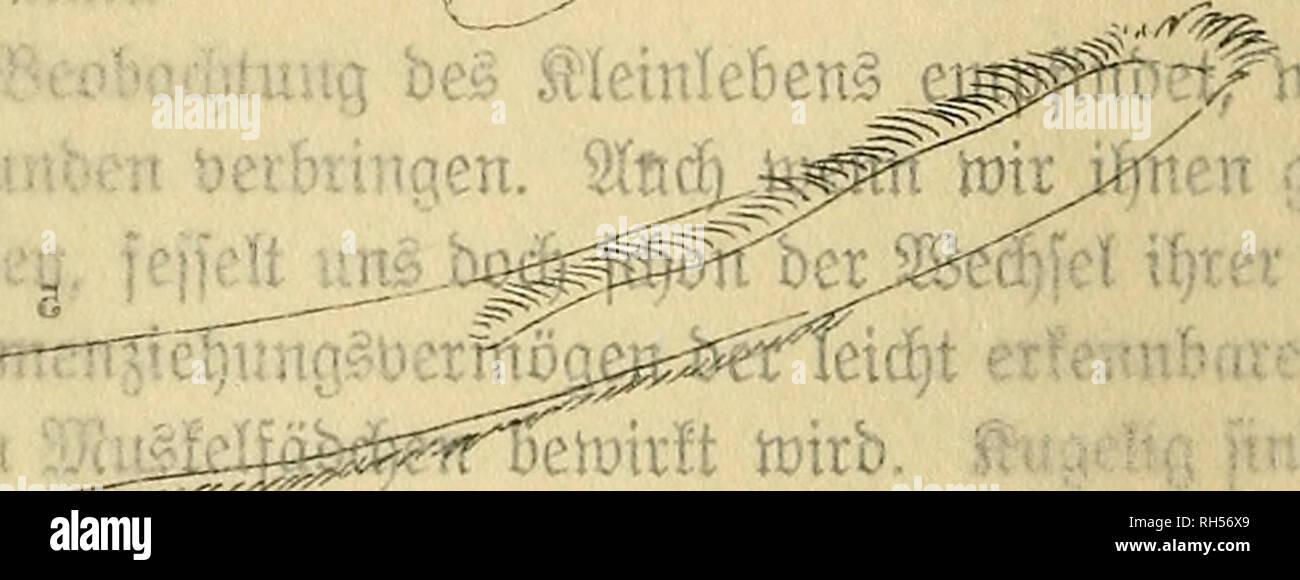 a066f3ce0c Brehms Tierleben. Allgemeine kunde des Tierreichs. Zoology  Animal  behavior. laue Xxompcte .