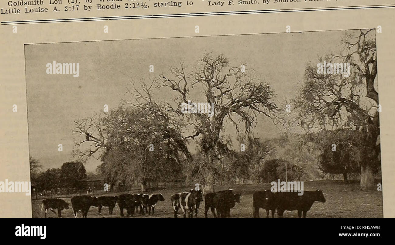 Breeder and sportsman  Horses  Saturday, July 24, 1915 ] THE