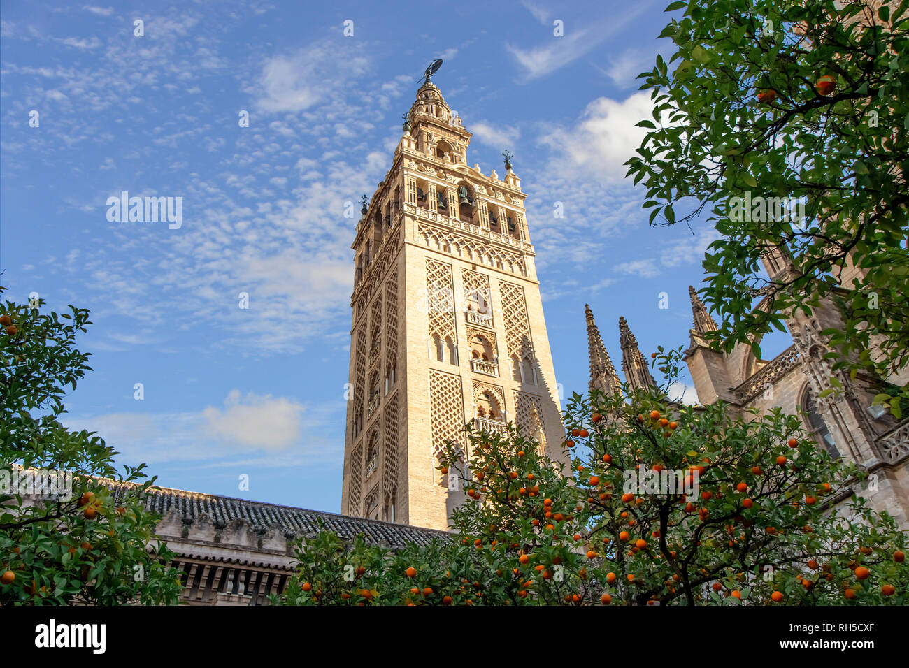View of Giralda tower of Seville Cathedral of Saint Mary of the See (Seville Cathedral)  with oranges trees in the foreground - Stock Image