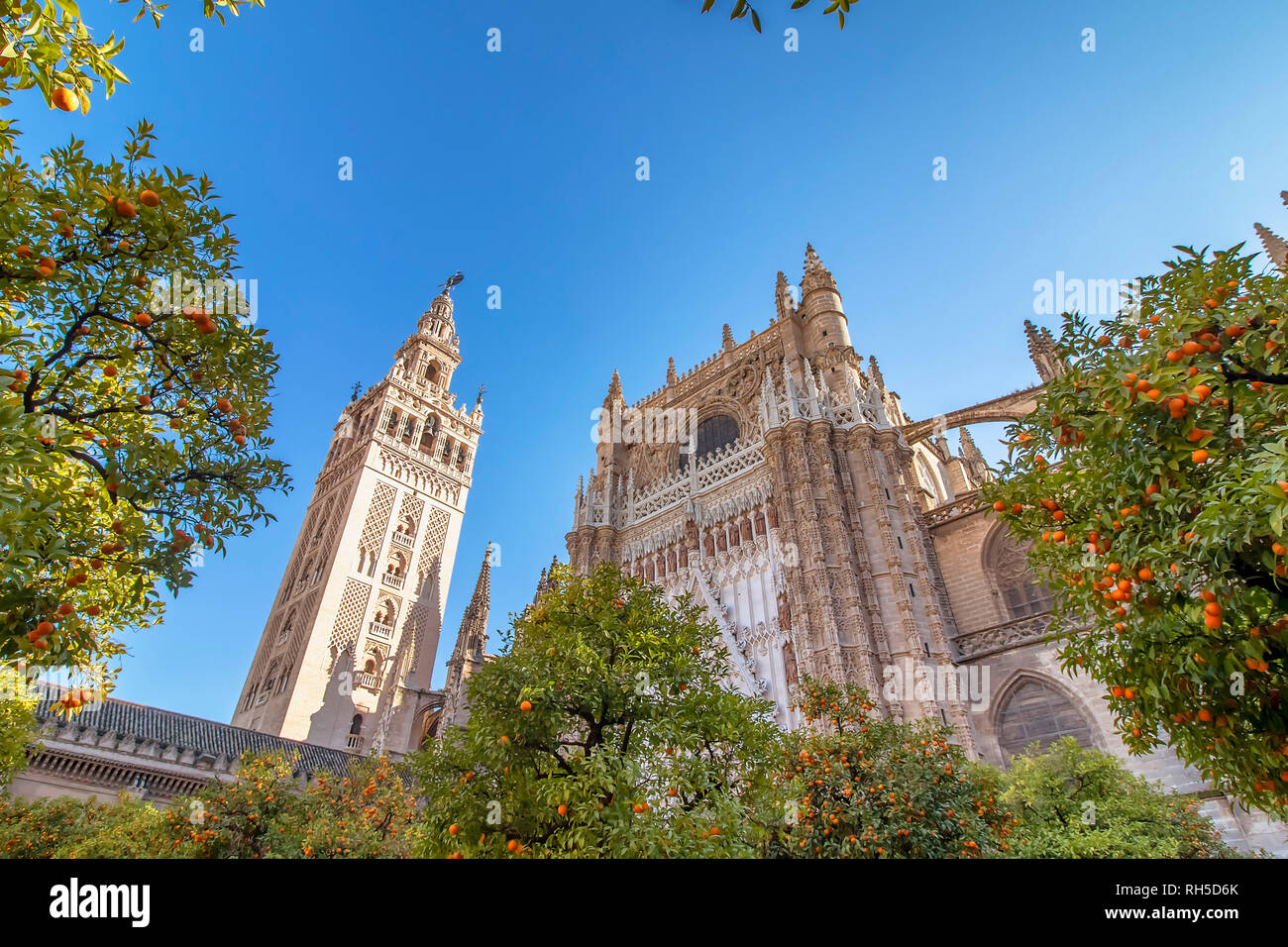 View of Seville Cathedral of Saint Mary of the See (Seville Cathedral)  with Giralda tower and oranges trees in the foreground - Stock Image