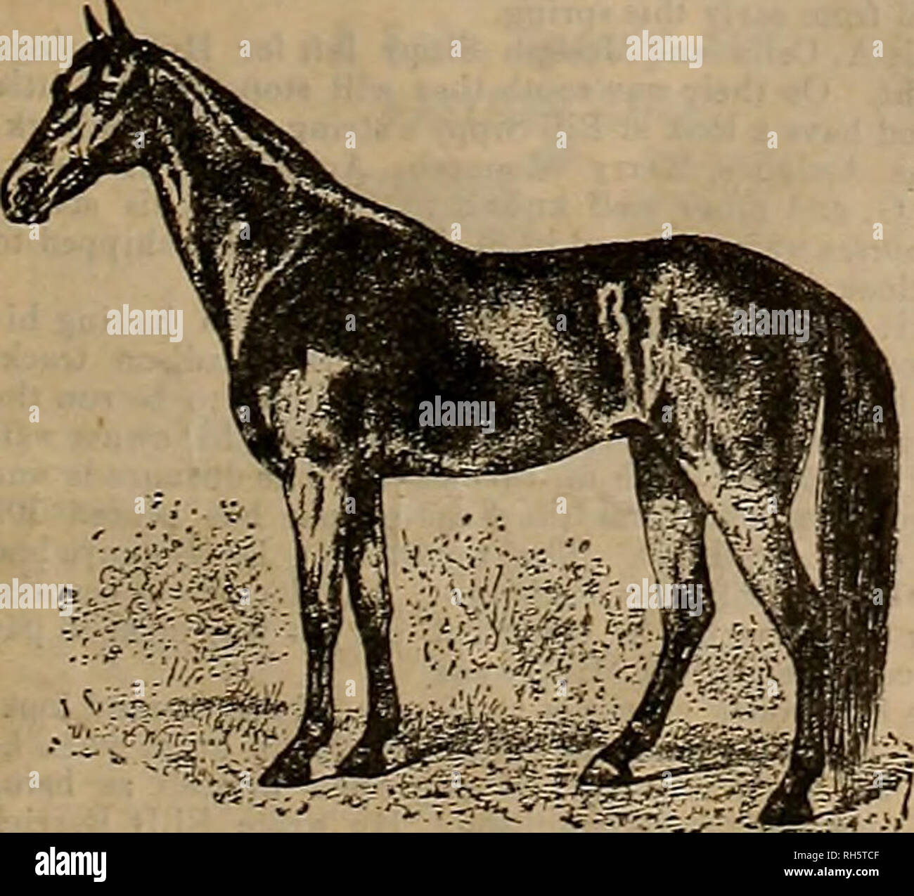 ". Breeder and sportsman. Horses. *arch;5, 18931 ffitp? ^veettev cmv gpfttt&mcm. 151 THE LETTER WHE4.T DBA.L California Newapp3r Man Who Played Seasational Part in the Greatest ""Wheat Combine in the World. Tha great, wheat combine, through, which the prica of that product has gone up from 65 cents to a point above the dollar mark and became the subject of g03sip in the two hemis- pheres, owes much of its success to J. T. Flynn, a well-known P-iciii; Coast newspaper man who was at one time an edi- torial writer on the Biekdsr a^d Sportsman. A year ago last June he went to St. Louis as  - Stock Image"