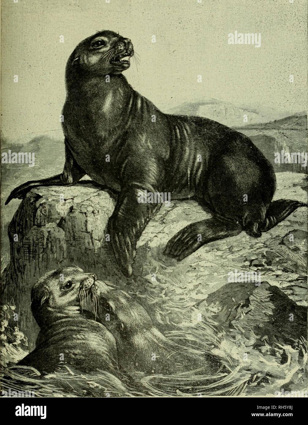 seal characteristics