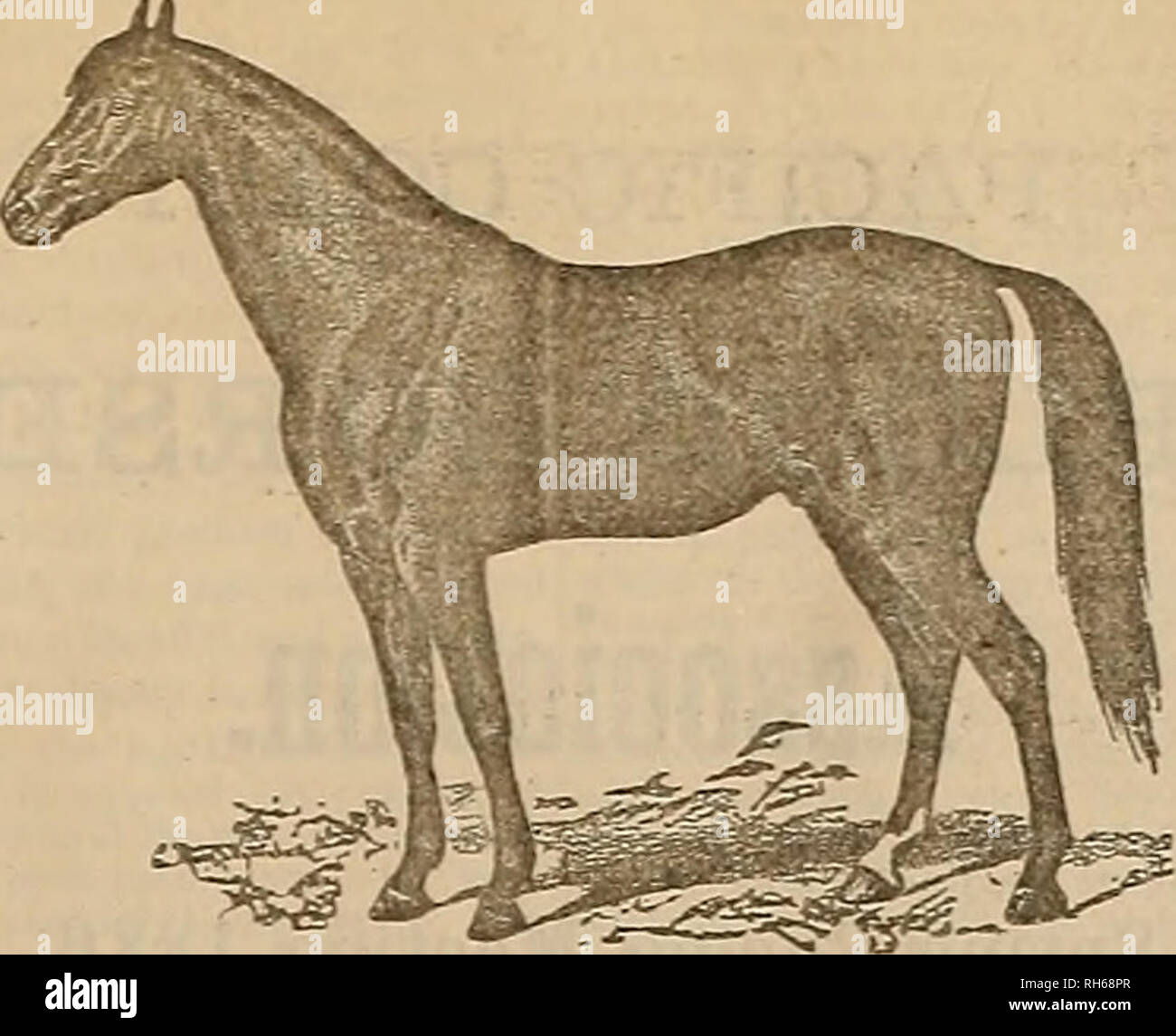 1 guy 1 horse