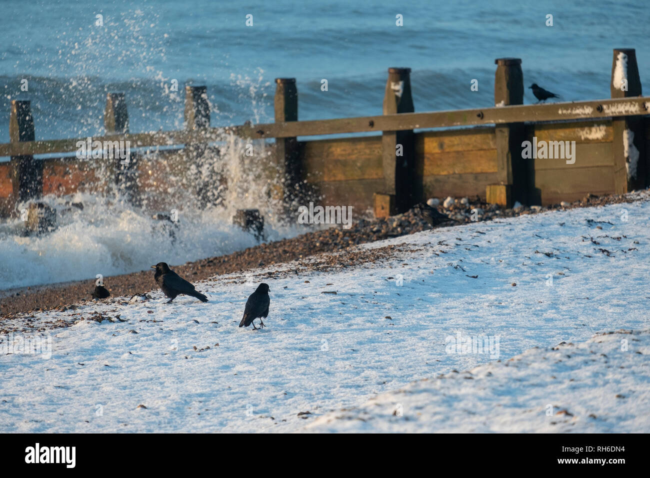 Ferring west Sussex, UK. Friday 1 st Febuary. UK weather. After moderate snowfall last night Ferring wakes to snow covered beaches. Â Credit: Photovision Images News/Alamy Live News Stock Photo