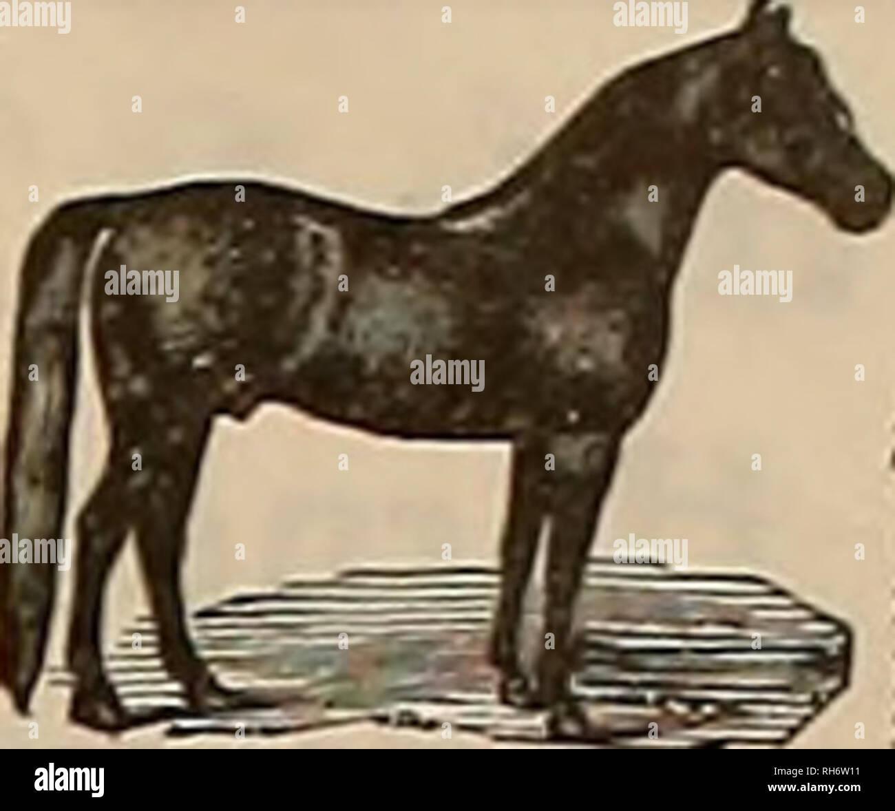 I Love Horses Stock Photos & I Love Horses Stock Images - Alamy