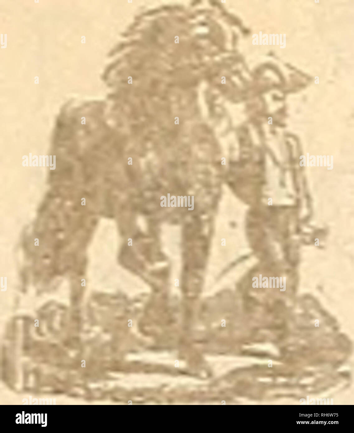 ". Breeder and sportsman. Horses. 12 ©He gveeftev cmb &povi*nicm [June 17, 1905 The Good Draft Horse. U a horse is e'lorl ribbed he if light i hie middle and is nearl; ' P00r feede. ""'g1' ,0 contain sufficient food I fr0U1 one meal to an en put into hard work he ger <Â«l.'6ed °""1 appea. â¢;! uorae sel- dom weighs well, and weight in a draft horse, if it comes from bone, sinew and moscle, goes a long way to determine his commercial value. When a horse ie well coupled together on top and has a short back be must have the length below from the point of the shoulder to the back o Stock Photo"