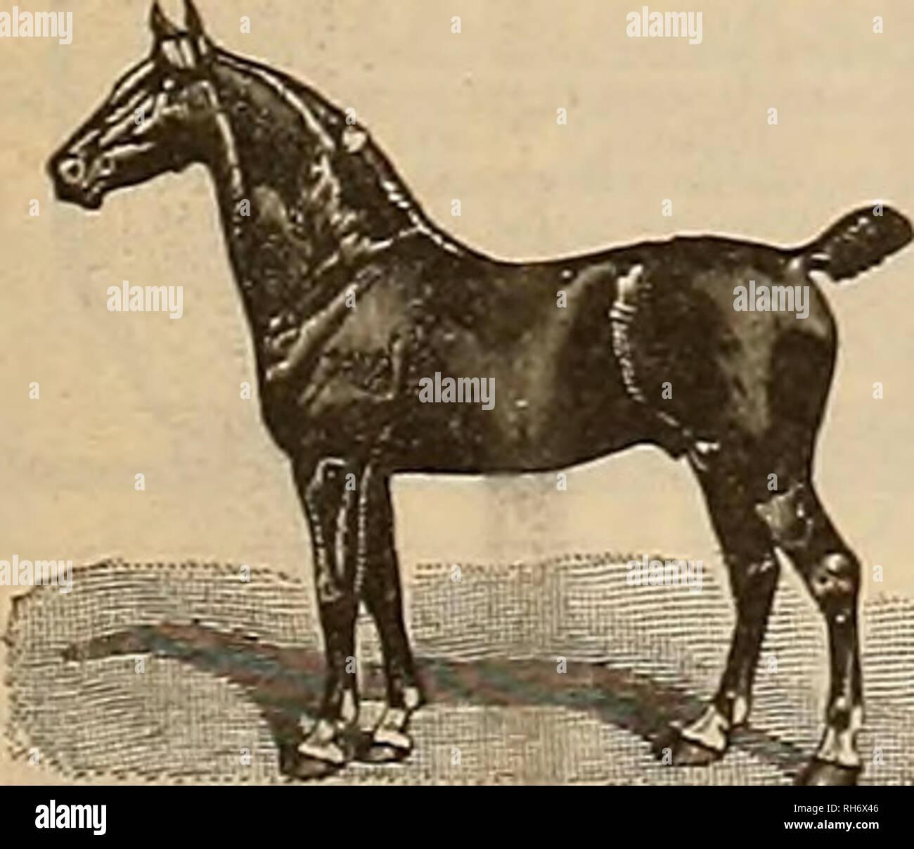 Breeder and sportsman  Horses  June 3, 1905j ©he gJre£t«ev anf