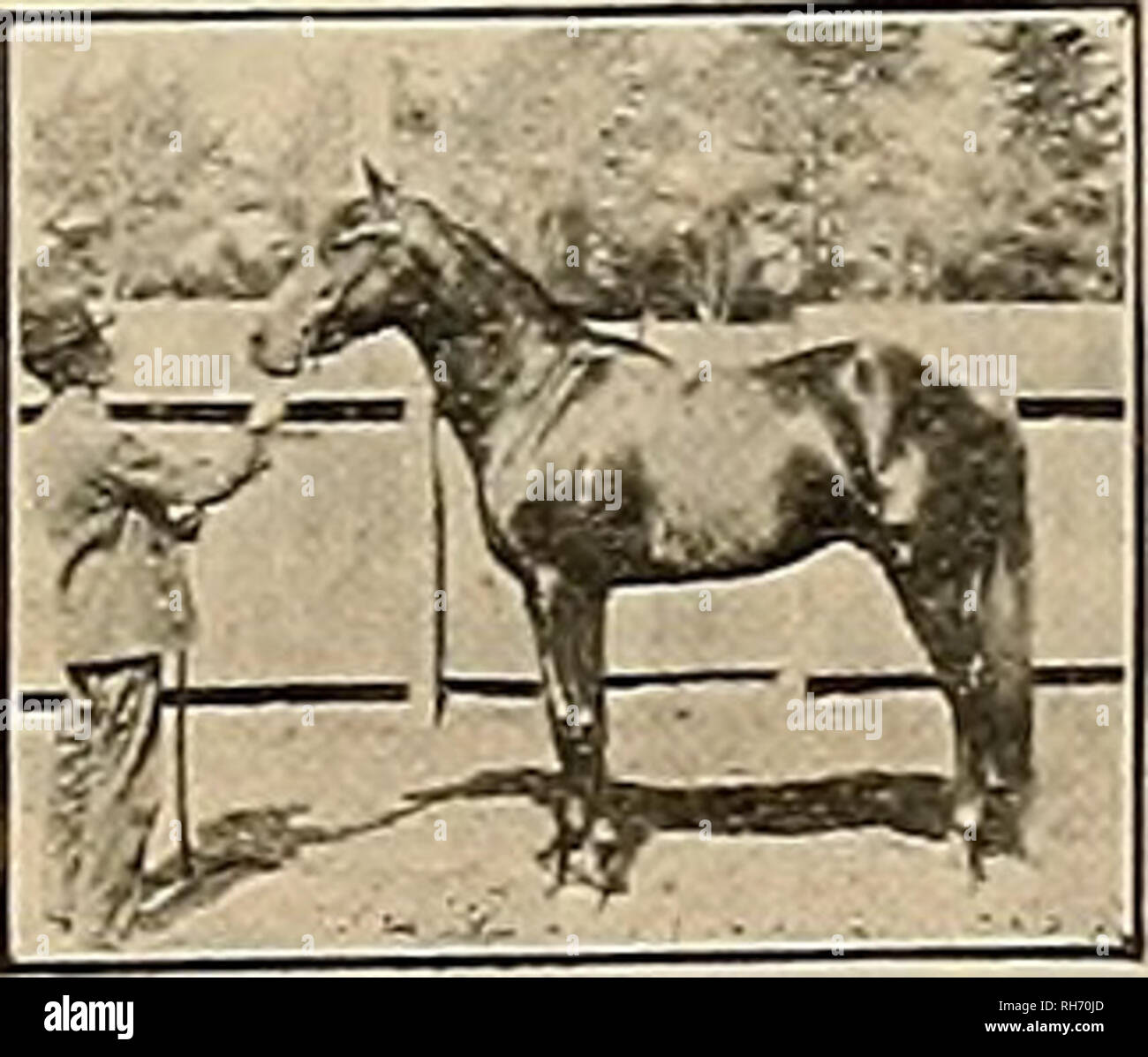 Breeder and sportsman  Horses  BUDD DOBLE  San Jose, Cal  Fee, $50