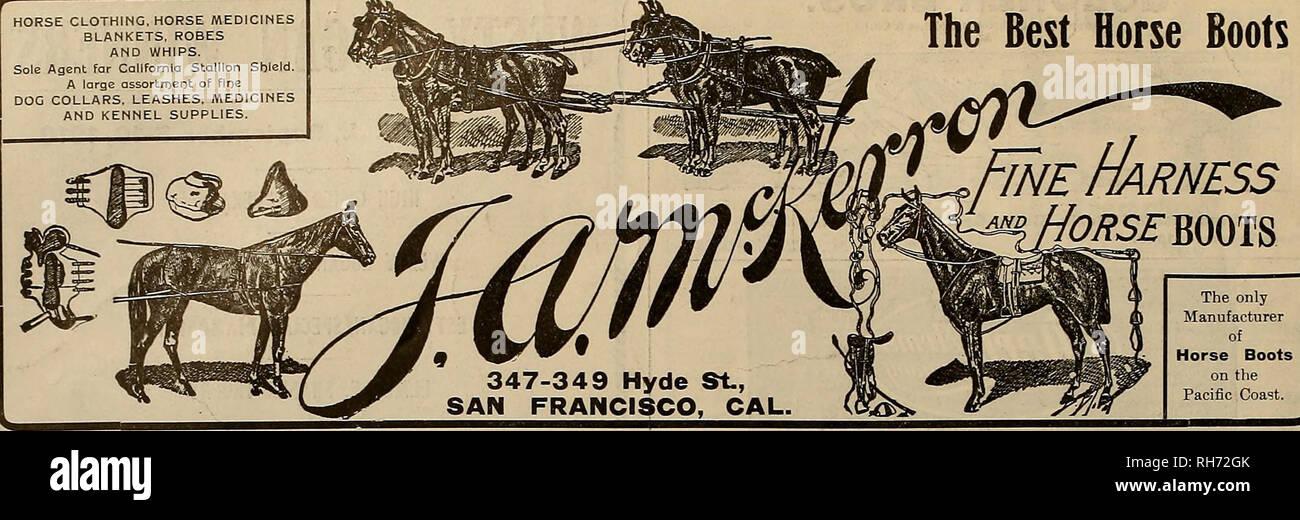 Dog Gun Horse Stock Photos & Dog Gun Horse Stock Images - Alamy