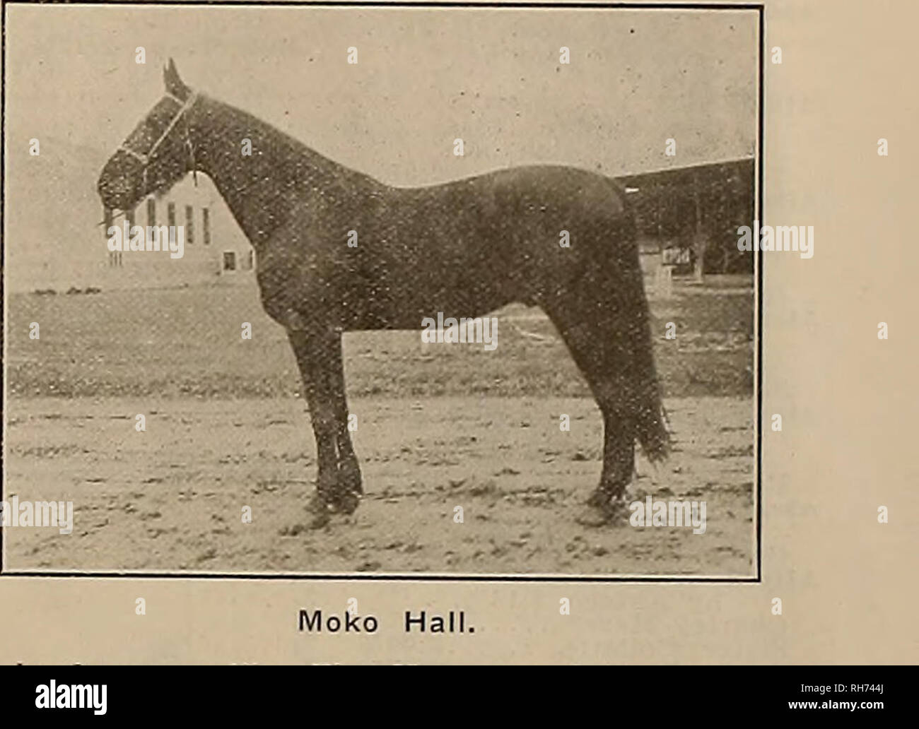 Breeder and sportsman  Horses  Guy McKinney, Sire of the