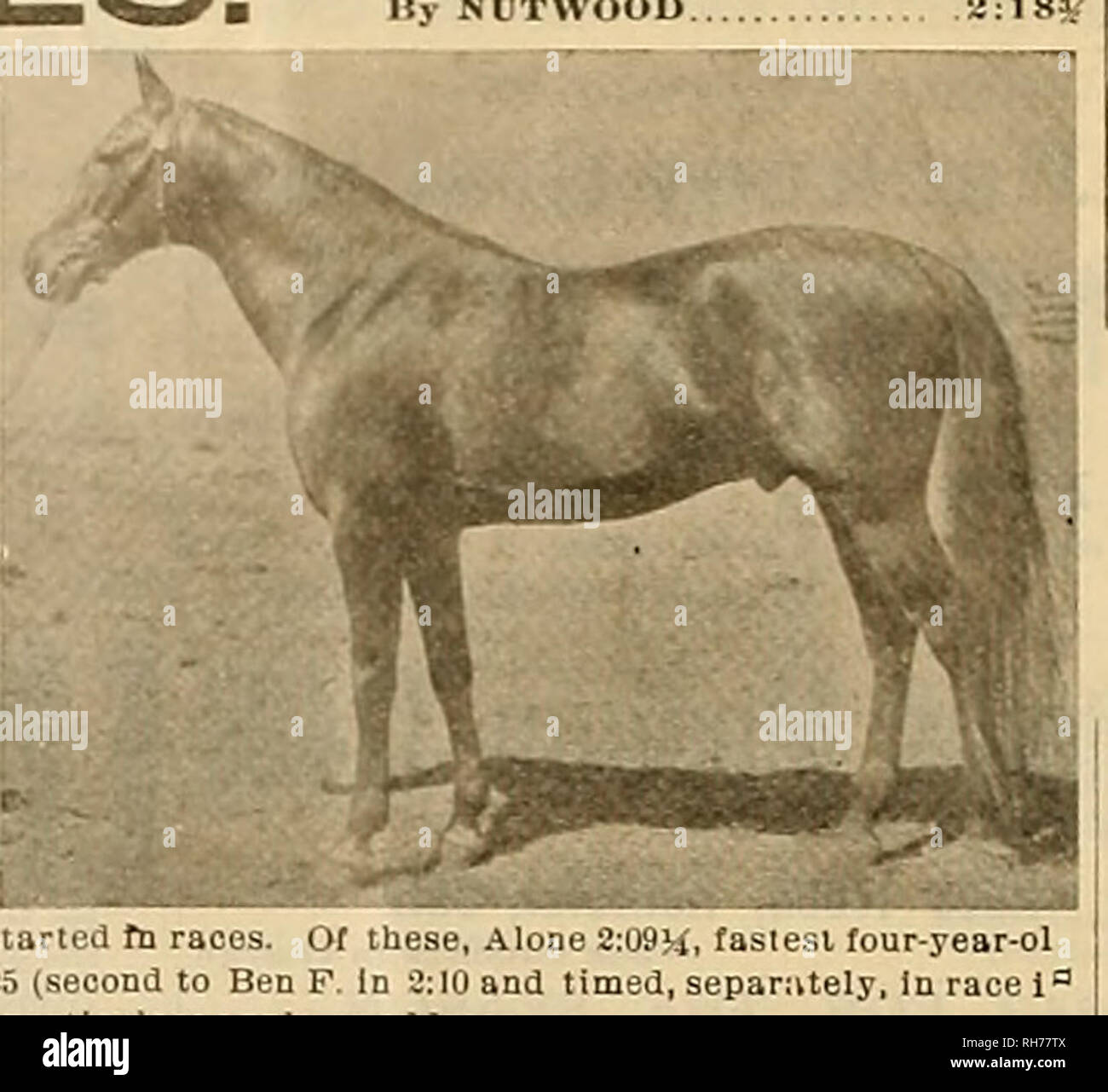 . Breeder and sportsman. Horses. 18 ©its ghrceocv cinit &povtamow [April 16, 1^04 THE CHAMPION SIRE OF EARLY AND EXTREME SPEED. NUTWOOD WILKES. g0 I, ar-olds in odo soason with Who in It, ex-champion three-year-old .1. in,  Hi Kerron 2:04»/, (2:12V Kblo be- fore removal of mare. Slock woll cared I ⢠pouiiiblllty u for accidents and escape?. â¦yButfourorflveof thograndsot, daughters of NUTWOOD WILKES ever started fn races. Of these, Alon ..A Caroline L. loilo 2:15 and Miss Georgia 2:25 (second to Beo F. in 0:10 and ?:09) aro out of bis daughters Xonog si.uk by Nutwood Wilkes for sale. F - Stock Image