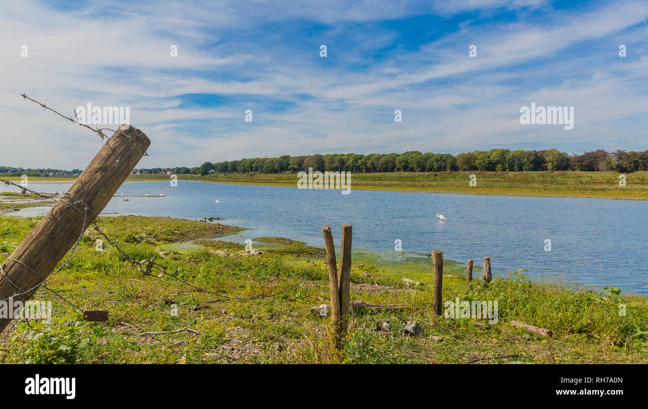 view of a barbed wire fence with wooden poles and the river Maas with blue waters and swans swimming in the background in river park Maasvallei - Stock Image