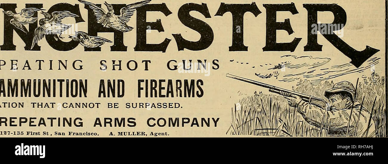 e8424876a Breeder and sportsman. Horses. REPEATING SHOT GUNS WINCHESTER AMMUNITION AND  FIREARMS ARE A .