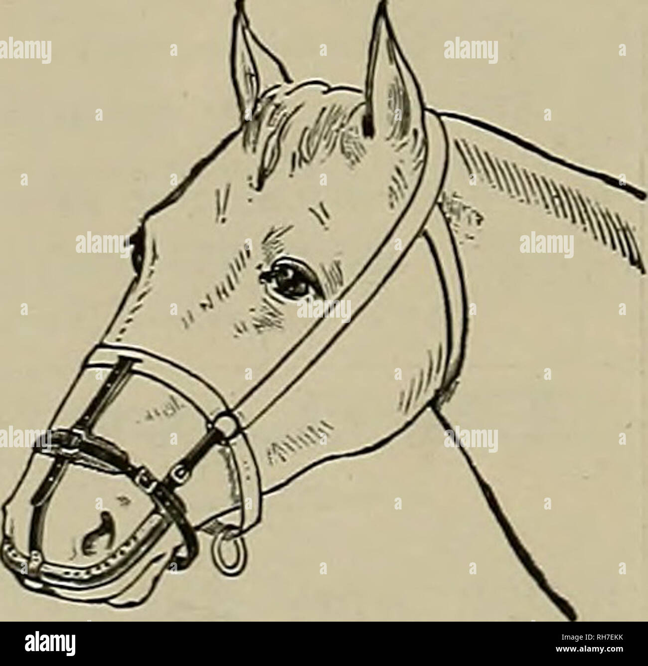 . Breeder and sportsman. Horses. 4 an be worn without dbvuuiluri while feeding and sleeping* A Specific for Catarrh in Horses. Cares and prevents DISTEMPER, and all contagions diseases COUGHS, COLDS, PINK-EYE, IN- FLUENZA, NASAL, GLEET, HEAVES, ete. The only effectual method Invented of applying medicine directly to the seat of the above-mentioned ailments in horses andcartle. AddreSB Welch Inhaler and Medicine Co., 57 Second St., San Francisco, Cal. SHAW CASTS id SULKIES. Please note that these images are extracted from scanned page images that may have been digitally enhanced for readability Stock Photo