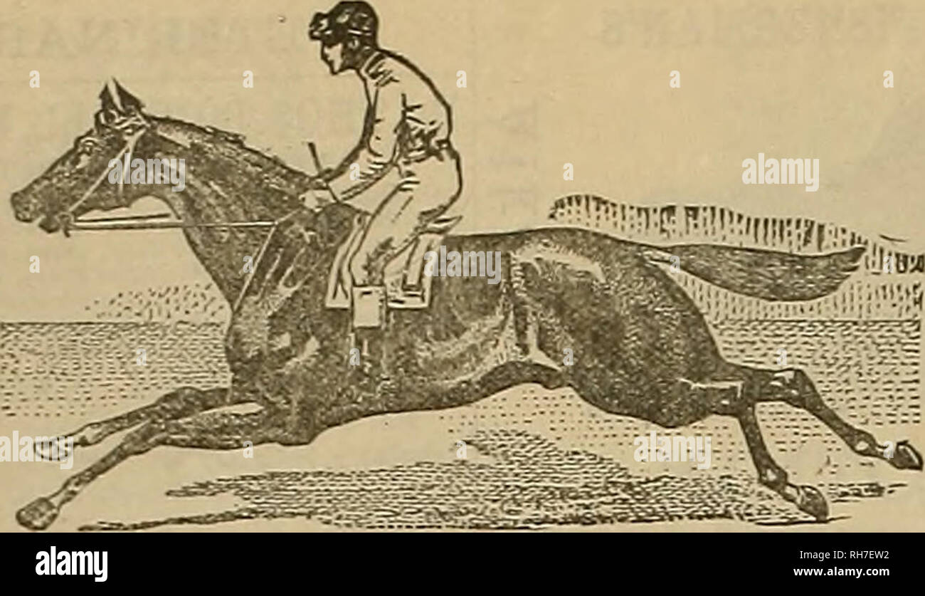 . Breeder and sportsman. Horses. 484 <p* ^vttfav until gpovtsmm. Dec. 7 trxO. CTD At J. A. McKERRON'S, 228, 230 J. C. JOHNSON <fc CO., IJH'OBTEBS, MAKCFAtrrBEKS, ASD DEALERS '. Please note that these images are extracted from scanned page images that may have been digitally enhanced for readability - coloration and appearance of these illustrations may not perfectly resemble the original work.. San Francisco, Calif. : [s. n. ] - Stock Image