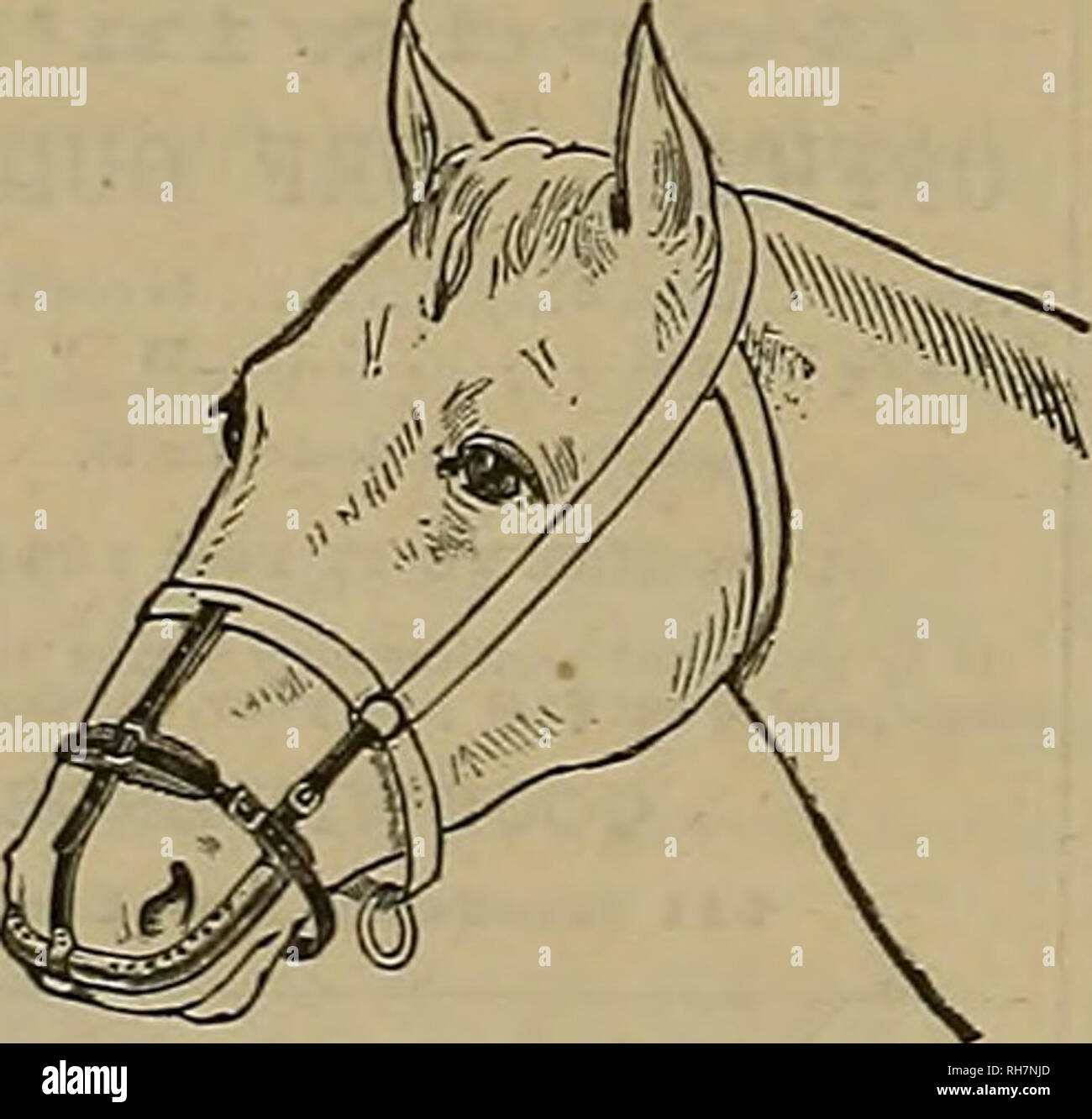 . Breeder and sportsman. Horses. Can T>e2 worn without discomfort  while feeding and sleeping. A Specific for Catarrh in Horses. Cures and prevents DISTEMPER, and aU contagious diseases COUGHS, COLDS, PLNK-EYE, IN- FLUENZA, NASAL, GLEET, HEAVES, etc. The only effectual method Invented of applyingTmedicine directly to the Beat of the above-mentioned ailments in horses andcattle. Address Welch Inhaler and Medicine Co., 57 Second St., San Francisco, Cal. Studehaker Bros. Manufact'g Co, Sole Agents for FRAZIER FEED ALL HORSES CLEAN OATS BY I'MXU I. Please note that these images are extracted f Stock Photo