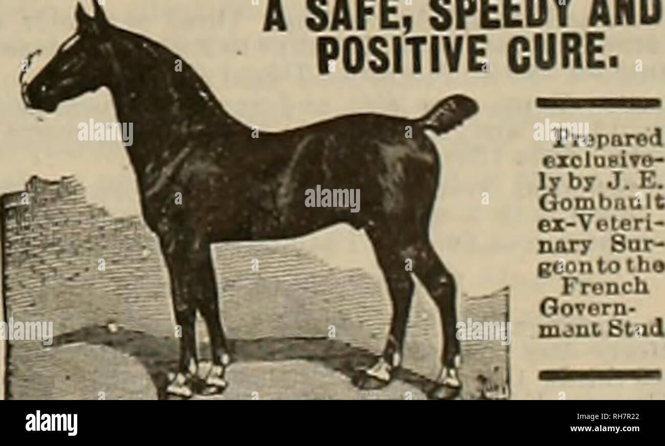 Breeder and sportsman  Horses  Darebin Succeeds in J3oth