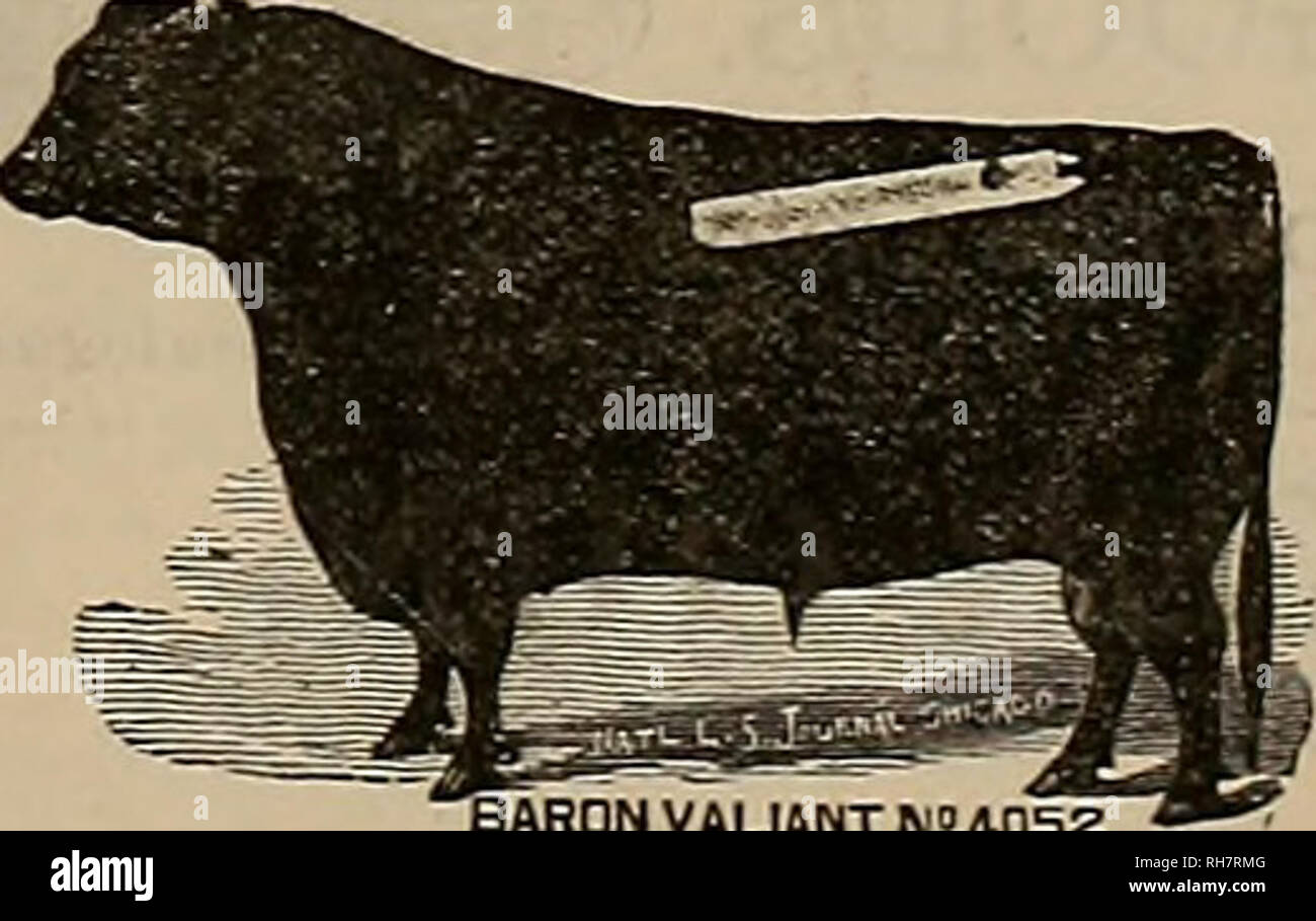 . Breeder and sportsman. Horses. Poplar Grove Breeding Farm.. S. N. STRA17BE, Proprietor. BARDN VAUANT N'JOSZ P. O Address, FRESNO. UL R. WATKINS, VETERINARY DENTIST, Of twelve years practice, is now permanently located in Pan Francisco, and may be found at C. S. Crtt- teiKieiiM' «inb Stable*, 409 Taylor street. WiH treat ailments nf the horse's mouth, aud cure all such. Sideiein Pollers and Tounge Loller-, etc. Saiisf iction guaranteed. Orders by mail will re- ceive prompt attention. Examination Free. R. W ATKINS. IMPROVED EXCELSIOR INCUBATOR !3r=^ Simple, Perfect and Self-ReeulalinR Hun. E£§ - Stock Image