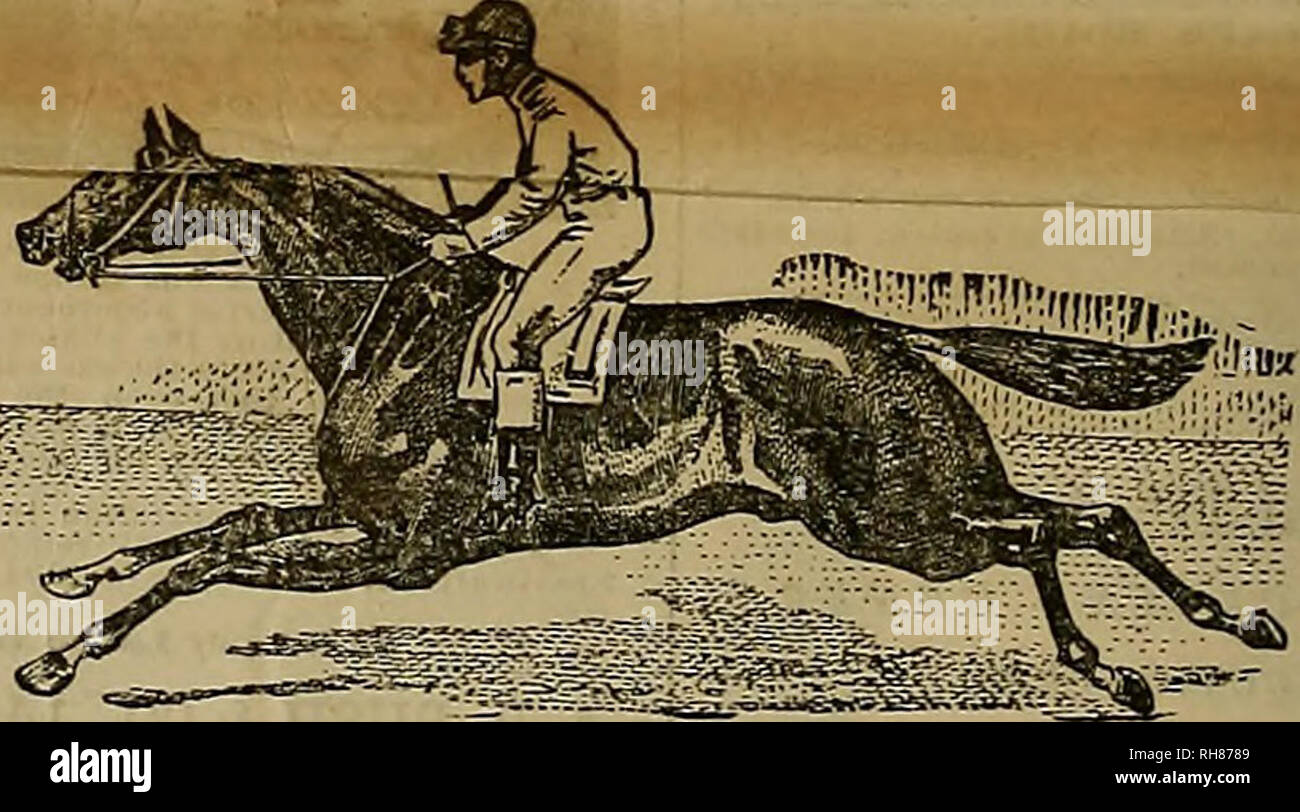 """. Breeder and sportsman. Horses. BG As PRIZE WINNERS we challenge ony other make of Gun to make a showing like the following: All Previous Records Broken. L c. gStS⢠wrSe^'S'it8 ^lilteafo^S^SS^ 8*%* Ba,?e conation,, nntil the cinnatl, Oliiu, tl.is wonderful scor """"""""'as mnue o.nt A it nâ¢F , e' ofthe firni °' Bandle Arrne Co , c,n. the match again,, Handle, the very MghSre of fe^A^nVS^^^^ *â¢â¢ 0. Smith in OFFICIAL SCORE of'l^ha'A! iTauo-'i?gS^BS?B. Ohio, on Independent Gun Club grounds, Cincinnati, Ohio, AL BANDLE, 10-gauge I,. C. Smith Run I CAPT A TT inrismio ,â , â â 1I2I112I1I 2 - Stock Image"""
