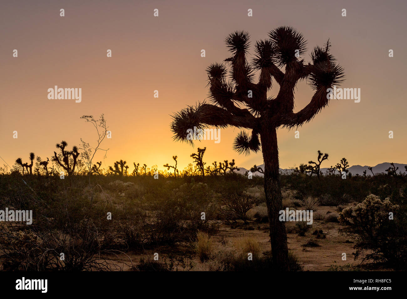 beautiful desert scenery in Californias Joshua Tree National Park