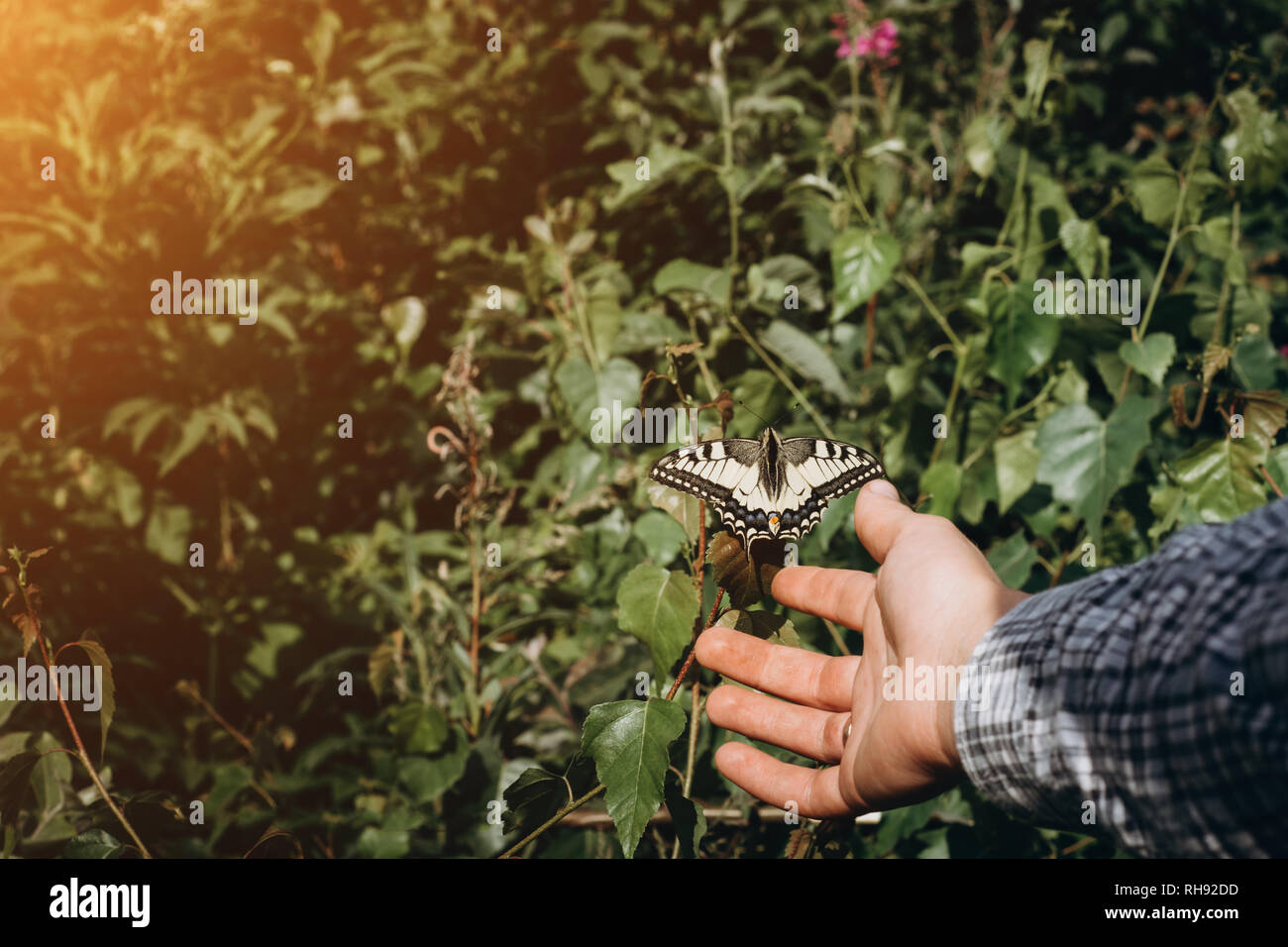 Girl hands and flying butterfly against green spring background. Ecology concept - Stock Image