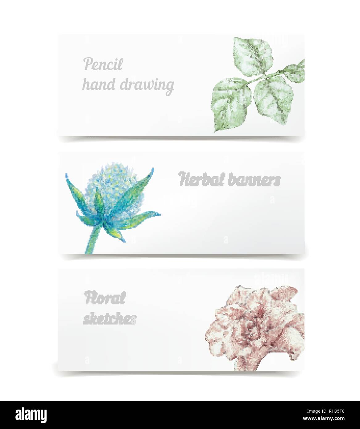 Vector Floral Hand Drawn Herbal Banners Color Pencils Botanical Elements As Heath And Beauty Decoration Rose And Leaves Under Clipping Mask Stock Vector Image Art Alamy