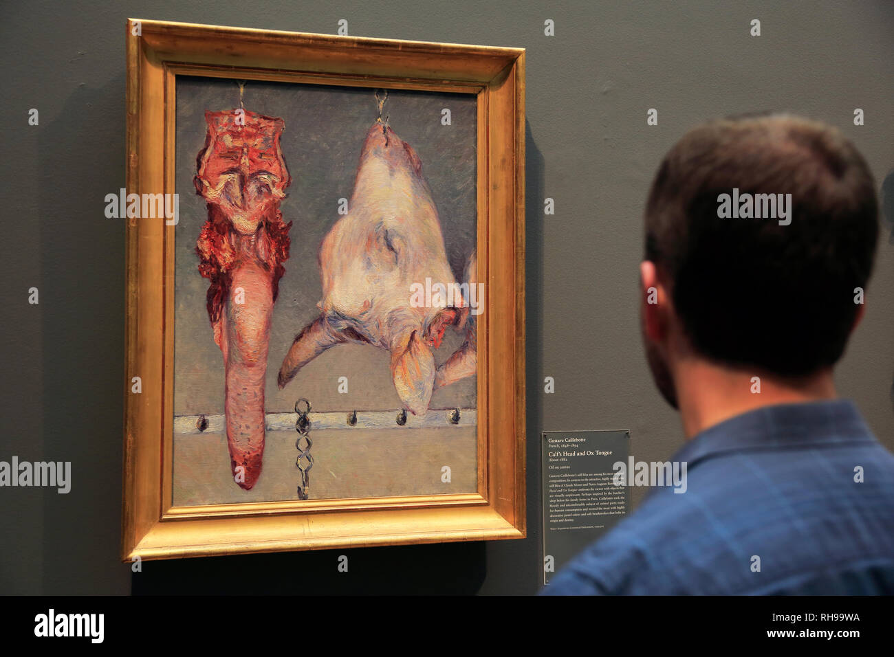 A visitor looking at Gustave Caillebotte's Calf's Head and Ox Tongue in Art Institute of Chicago. Chicago.Illinois. USA - Stock Image