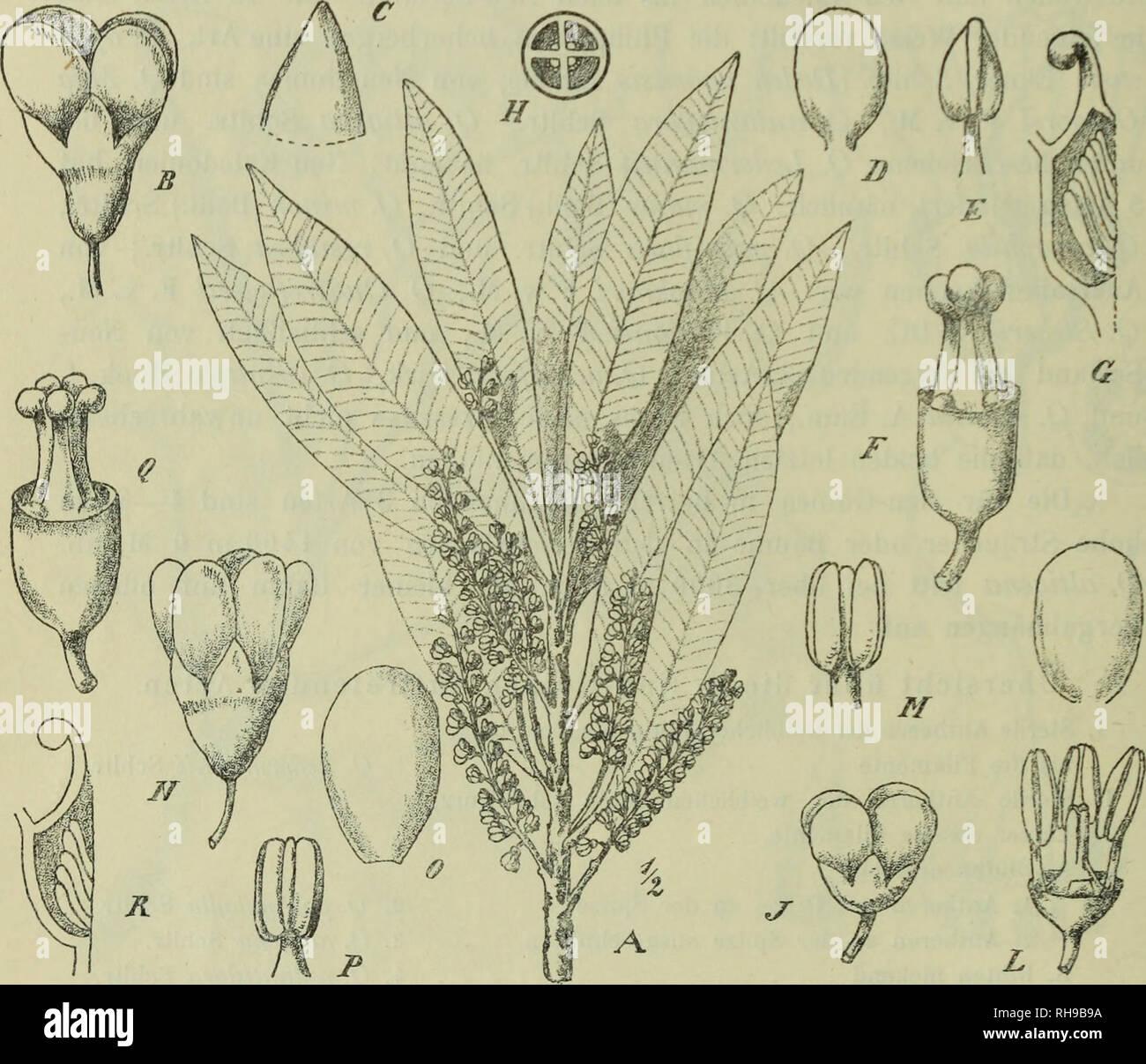 Botanische Jahrbu Cher Fu R Systematik Pflanzengeschichte Und