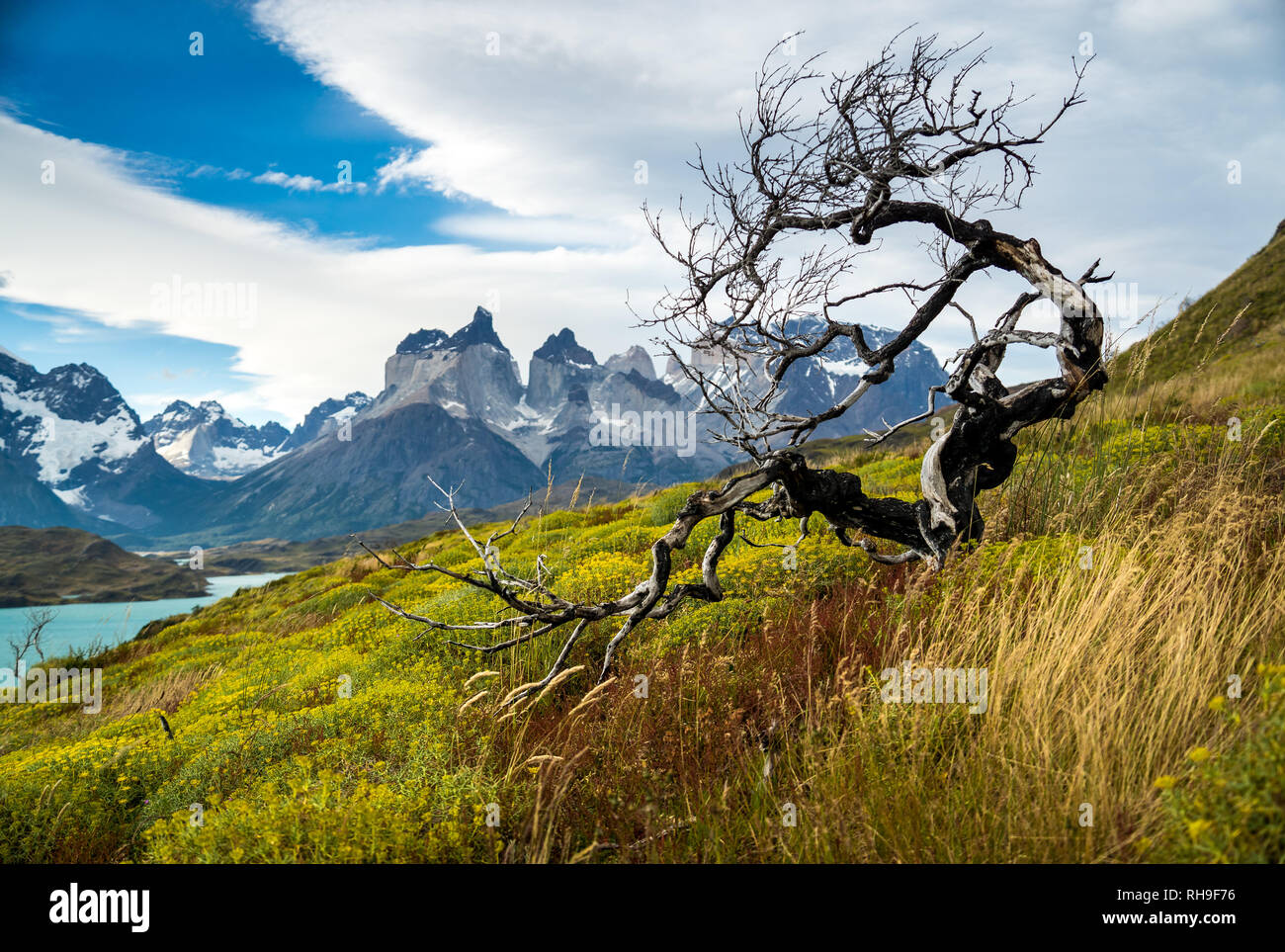 a burned tree and the worldfamous view of the Torres del Paine Massiv - Stock Image