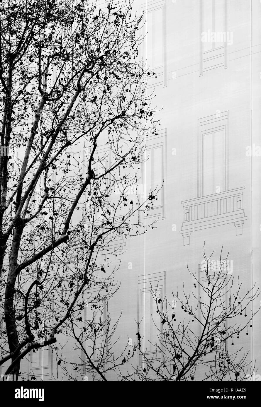 Trees near the facade of a building - Stock Image